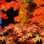 京都の紅葉のおすすめはココ!時期は?ランチも楽しみたい!