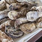 三重県の牡蠣食べ放題の時期って?浦村がおすすめ!ツアーで行きたい!