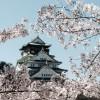 大阪の花見スポットはココ!バーベキューができる所は?